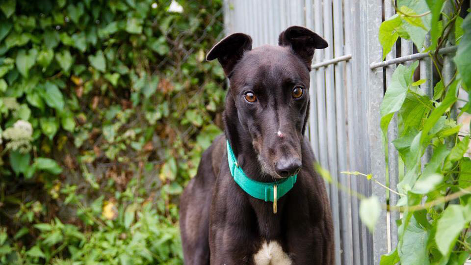 Hoping for a home: Ned